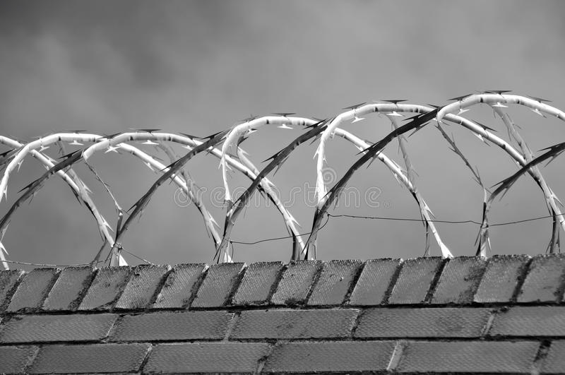 Borders Wire And White Barbed Black