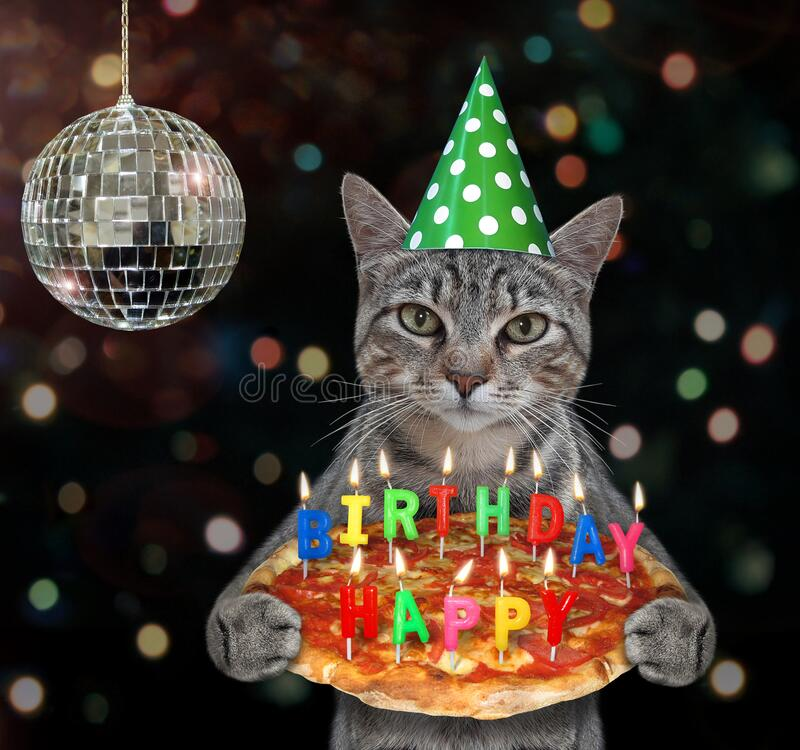 2 576 Cat Birthday Party Photos Free Royalty Free Stock Photos From Dreamstime