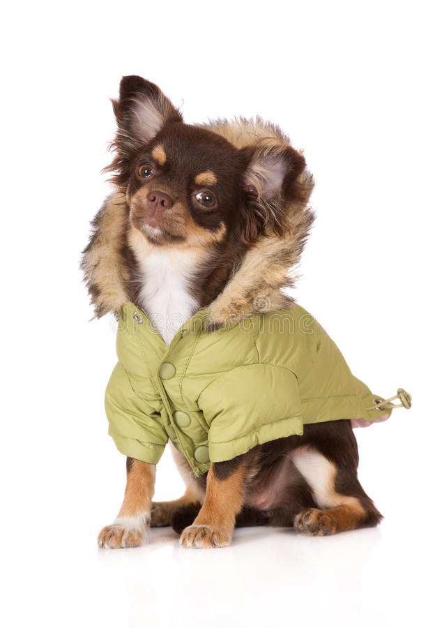 Dog Wearing Winter Coat
