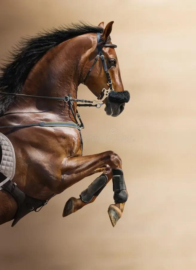 Challenger Tack Horse Western Fleece Padded Brown Leather Brass Adjustable Hackamore 35H40 Challenger Horsewear