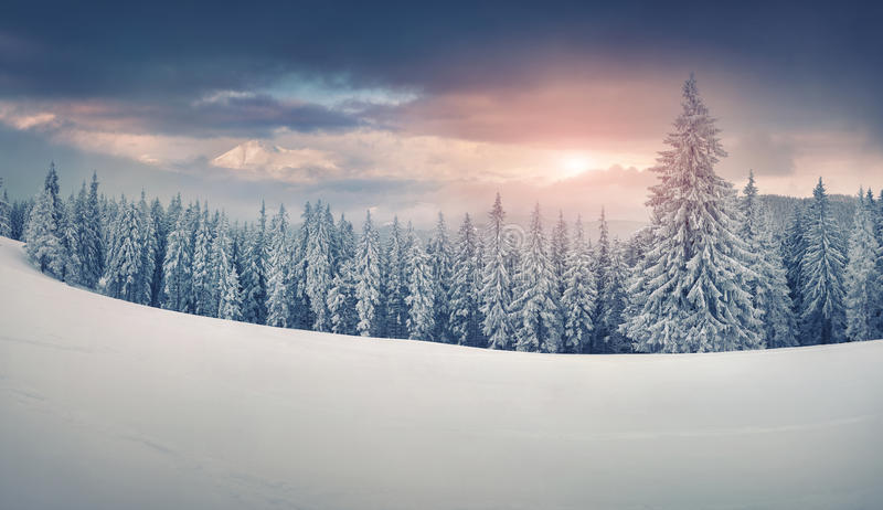 Colorful Winter Panorama Of Snowy Mountains Stock Image