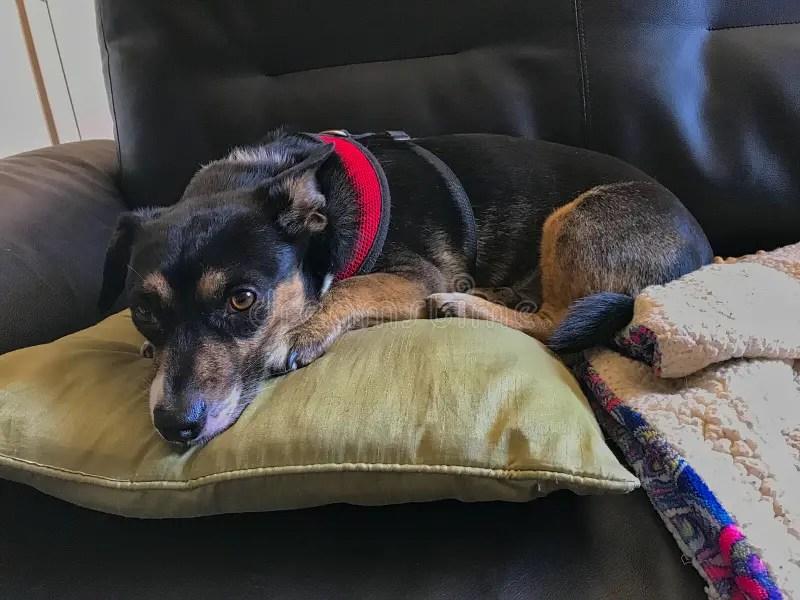 8 985 dog pillow photos free