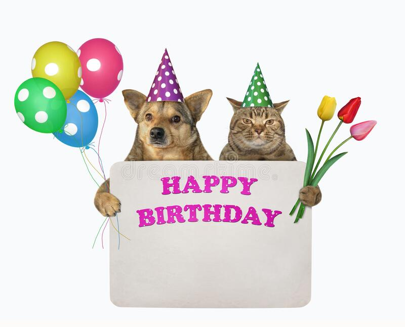 597 Dog Cat Birthday Photos Free Royalty Free Stock Photos From Dreamstime