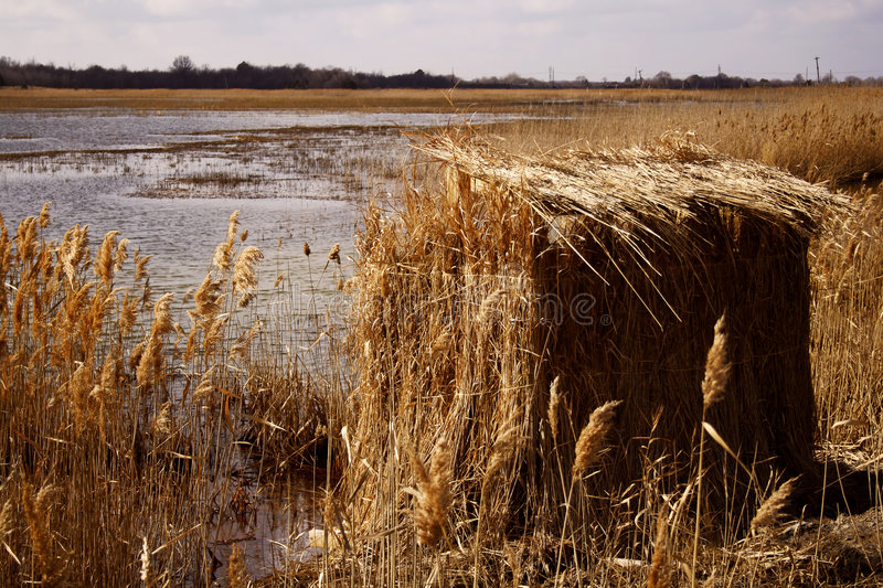Duck Blind Stock Photo Image Of Marsh Blind Grass Shed