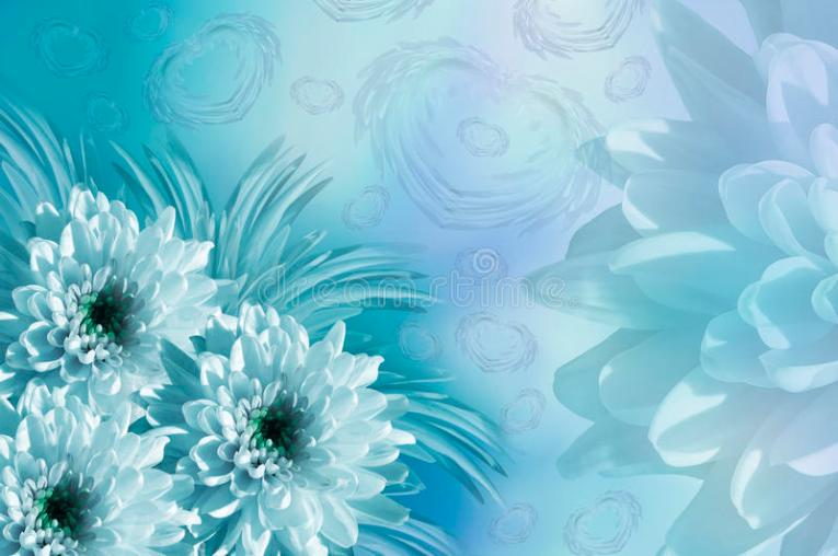 Flowers Background  Flowers White turquoise Chrysanthemums  Floral     Download Flowers Background  Flowers White turquoise Chrysanthemums  Floral  Collage  Flowers Composition