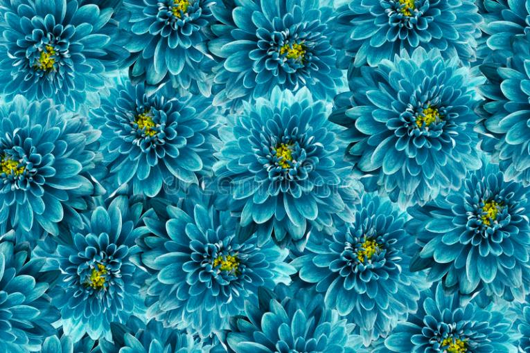 Flowers Background  Turquoise Flowers Chrysanthemum  Close up     Download Flowers Background  Turquoise Flowers Chrysanthemum  Close up   Floral Collage  Flower
