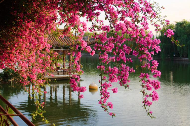 Flowers in Chinese park  stock image  Image of branch   37869569 Download Flowers in Chinese park  stock image  Image of branch   37869569