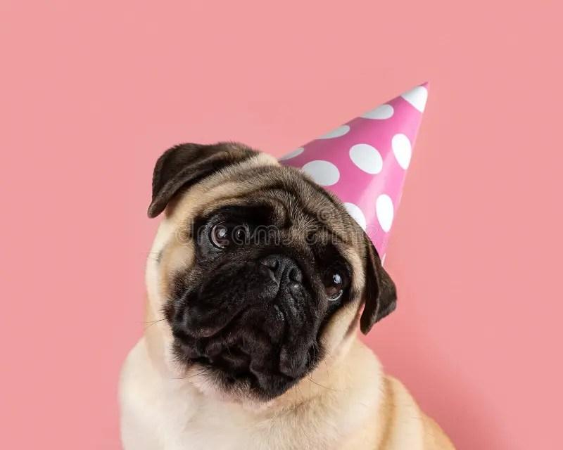 7 767 Happy Birthday Funny Animal Photos Free Royalty Free Stock Photos From Dreamstime