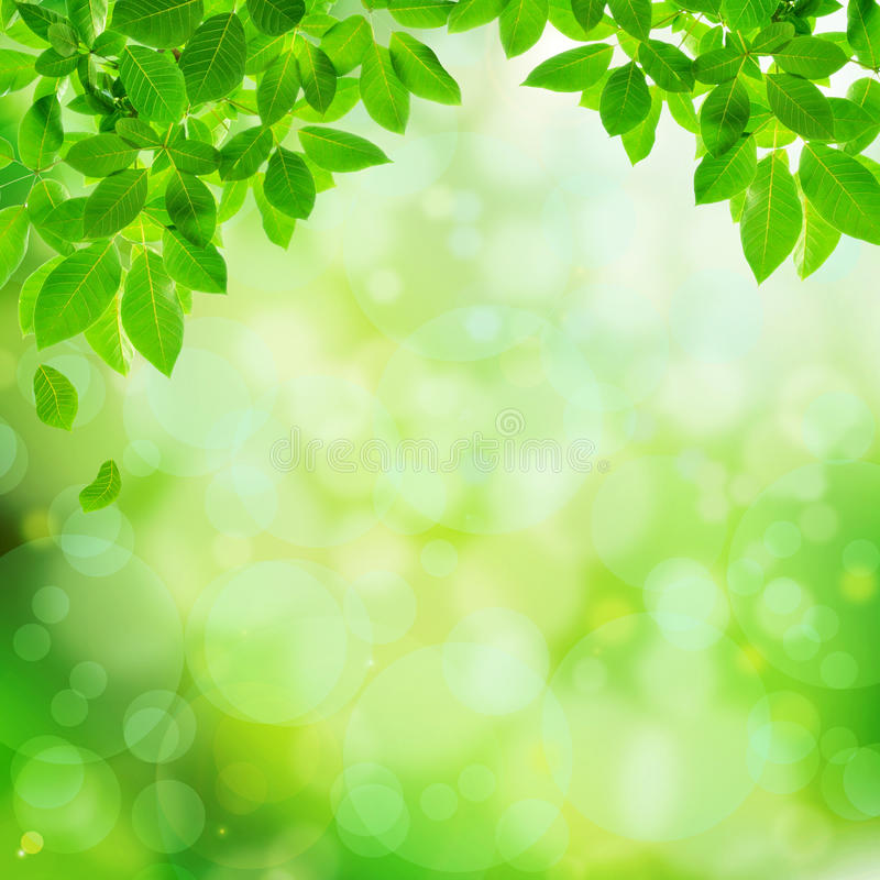 Green Natural Abstract Background Stock Illustration Image 35971822