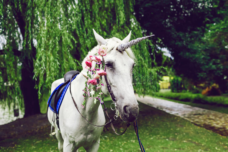 Horse Dressed As A Unicorn With The Horn Ideas For