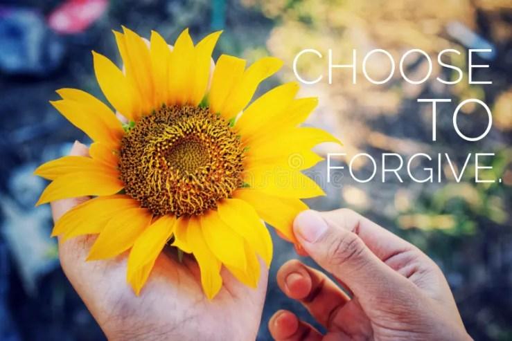 618 Forgiveness Flower Photos - Free & Royalty-Free Stock Photos ...