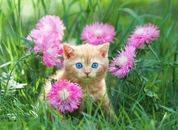 Little Kitten Sitting In Flowers Stock Photo   Image of mammal     Download Little Kitten Sitting In Flowers Stock Photo   Image of mammal   fresh  36238608