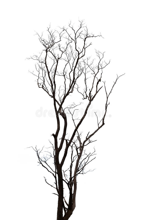 Silhouette Tree Stock Photo Image Of Aged Wild Wooden 32487584