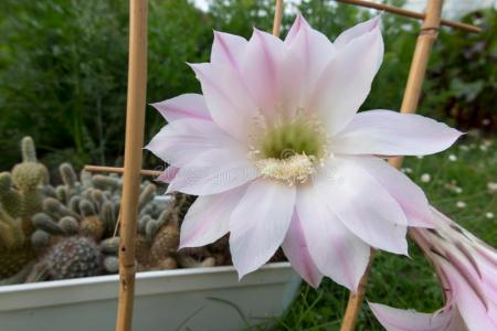 Flower shop near me small cactus with pink flowers flower shop small cactus with pink flowers the flowers are very beautiful here we provide a collections of various pictures of beautiful flowers charming mightylinksfo