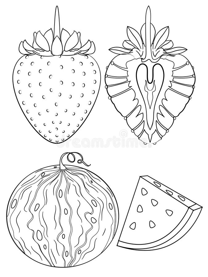 Strawberry And Watermelon Coloring Page Stock Photo Illustration Of Strawberry Books 77236052