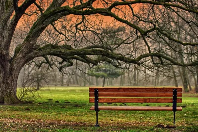 Autumn Landscape The Tranquility Of The Park Romantic
