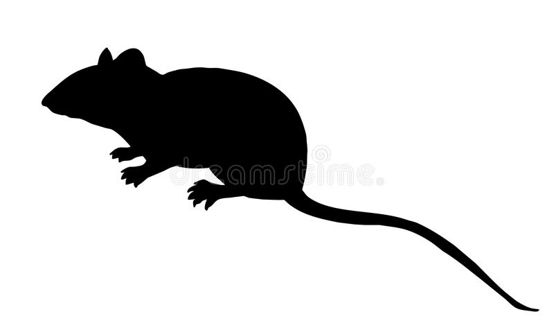 Vector Silhouette Mouse Stock Vector Illustration Of