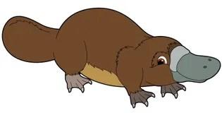 cartoon animal platypus illustration for the children stock image