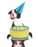 Birthday Puppy Stock Image Image 18339431