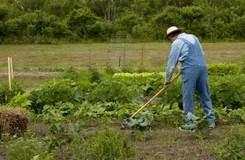 Labourage Avec Une Vieille Charrue Image Stock Image Du