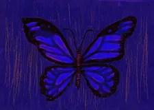 Bleistift Zeichnung Schmetterling Stockfotos 85