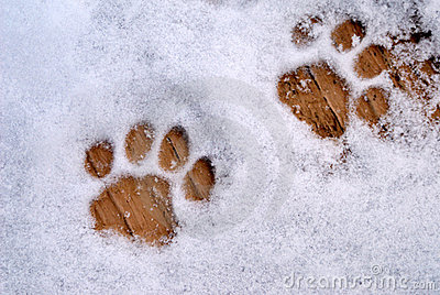 Cat Prints In Snow Stock Photo Image 12829410