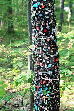 Chewing Gum on Tree