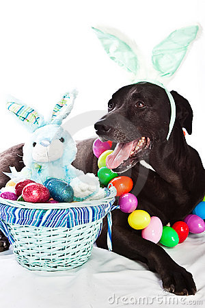 Dog And Easter Basket Stock Images Image 14030854