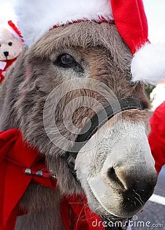 Donkey With Christmas Hat Stock Photos Image 19750443