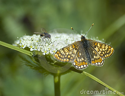 Fly and butterfly