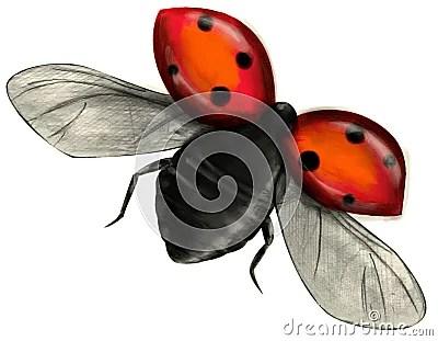 Flying Ladybug Isolated Royalty Free Stock Image Image