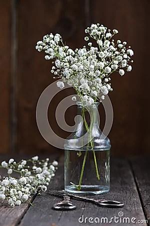 Fresh Wild Meadow White Flowers In Mason Jar Stock Photo