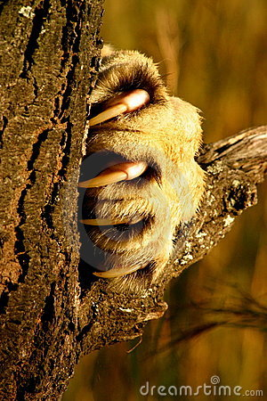 Lion Claw Stock Images Image 5190364