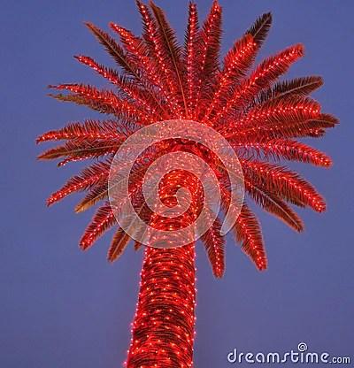 Lit Up Palm Tree Stock Image Image 17300101