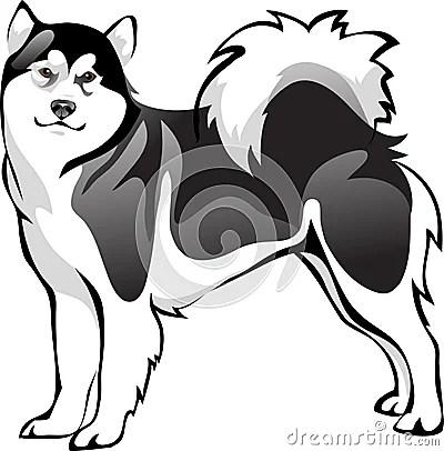 Malamute Dog Breed Royalty Free Stock Photo Image 36098975