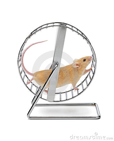 https://i2.wp.com/thumbs.dreamstime.com/x/mouse-exercise-wheel-13758830.jpg