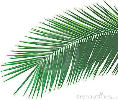 Palm Leaf Royalty Free Stock Images Image 8644019