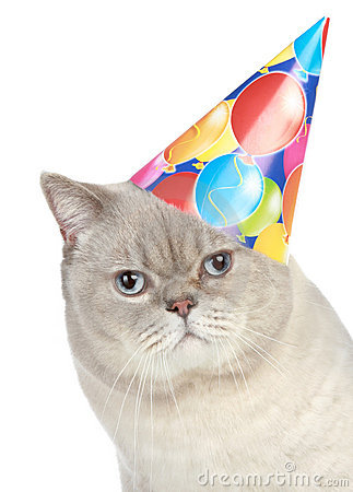 Portrait Of A Cat With Party Hat Stock Photography Image