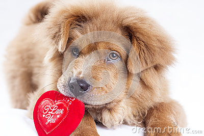 Puppy Love Stock Photo Image 49154281