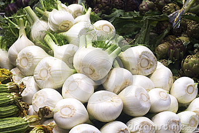 Raw Fennel at Farmers Market