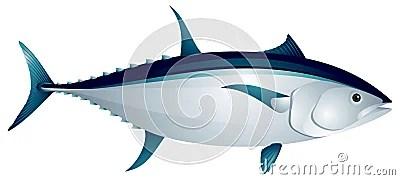Tuna Fish Royalty Free Stock Photos - Image: 24436508 (400 x 179 Pixel)