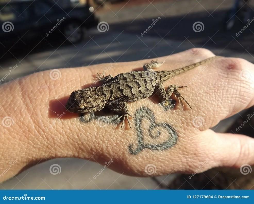 ящерицы и татуировки стоковое фото изображение насчитывающей знак