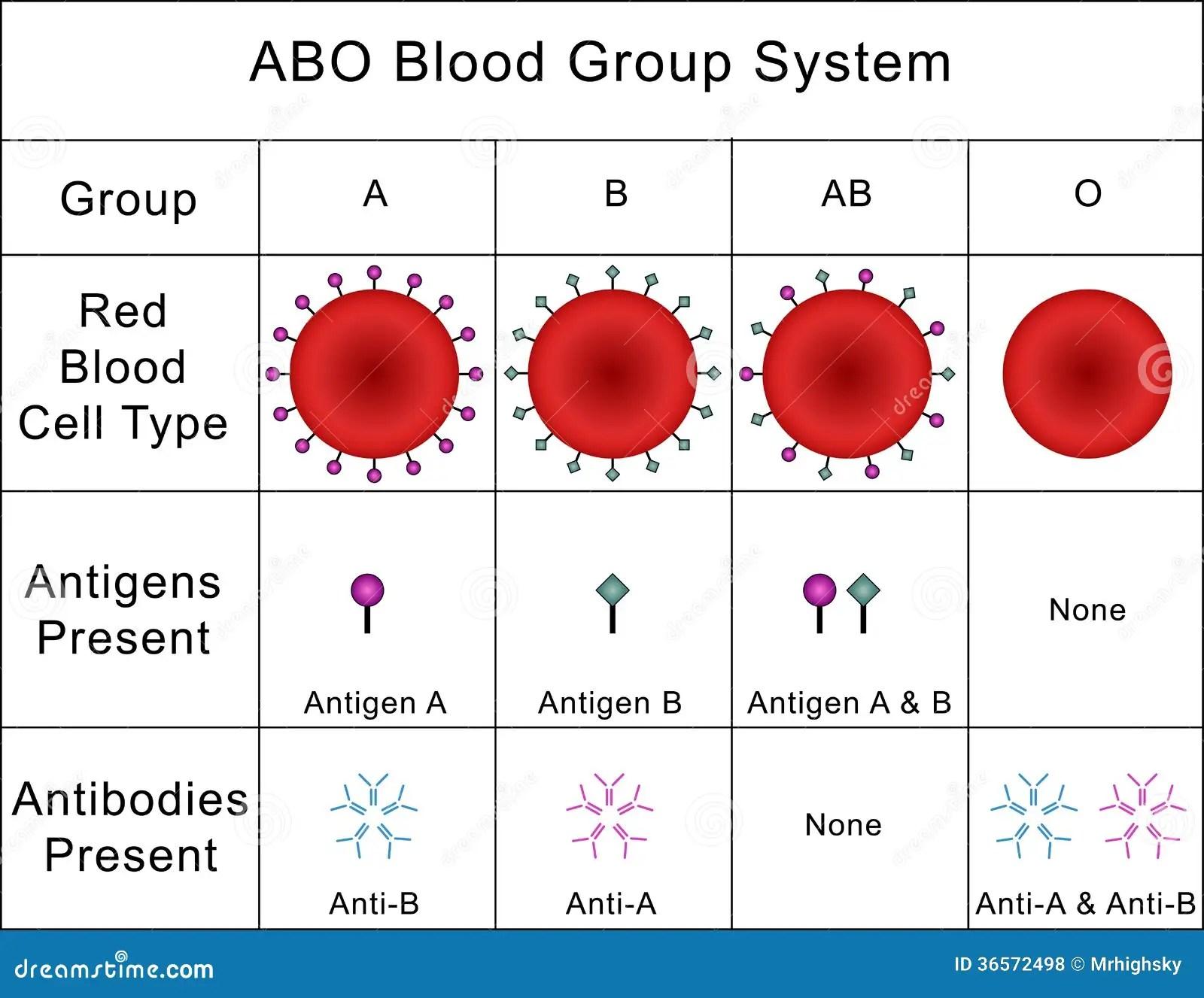 Abo Blood Group System Stock Photo Illustration Of Study