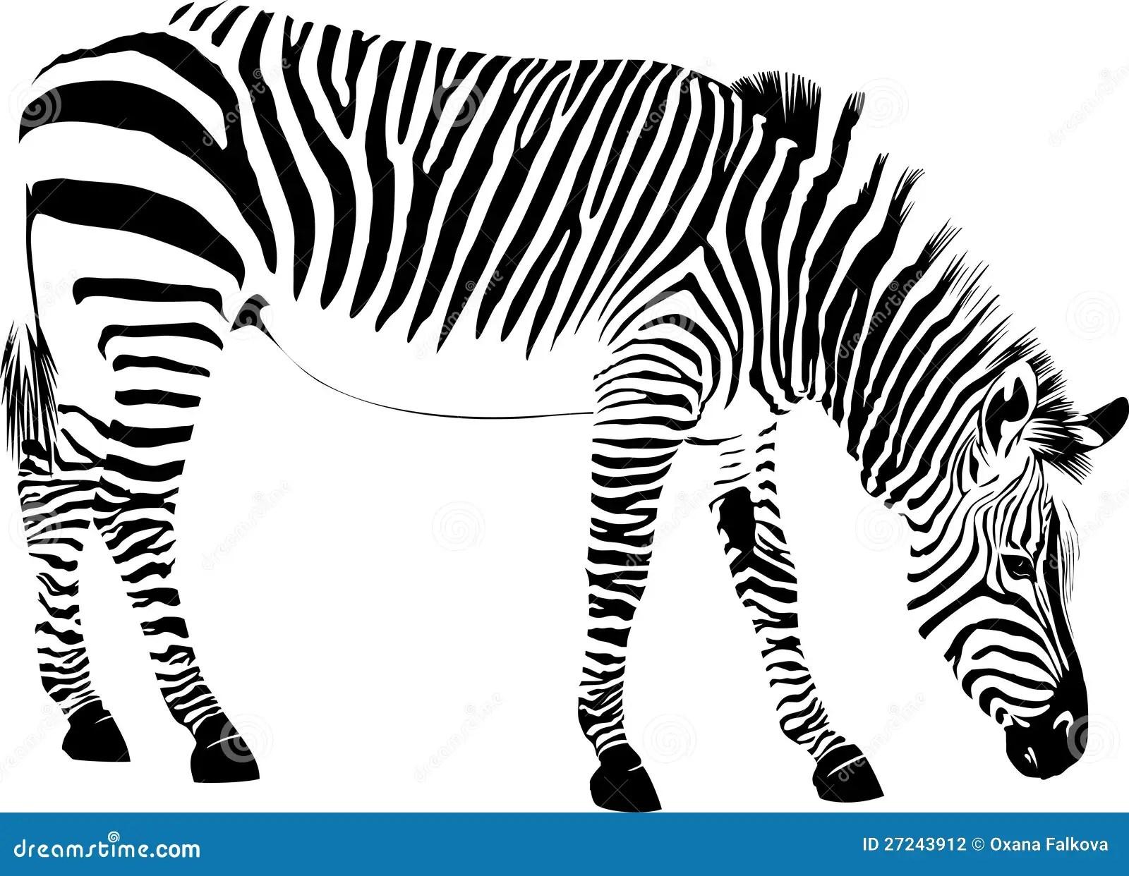 Abstract Zebra Stock Photography