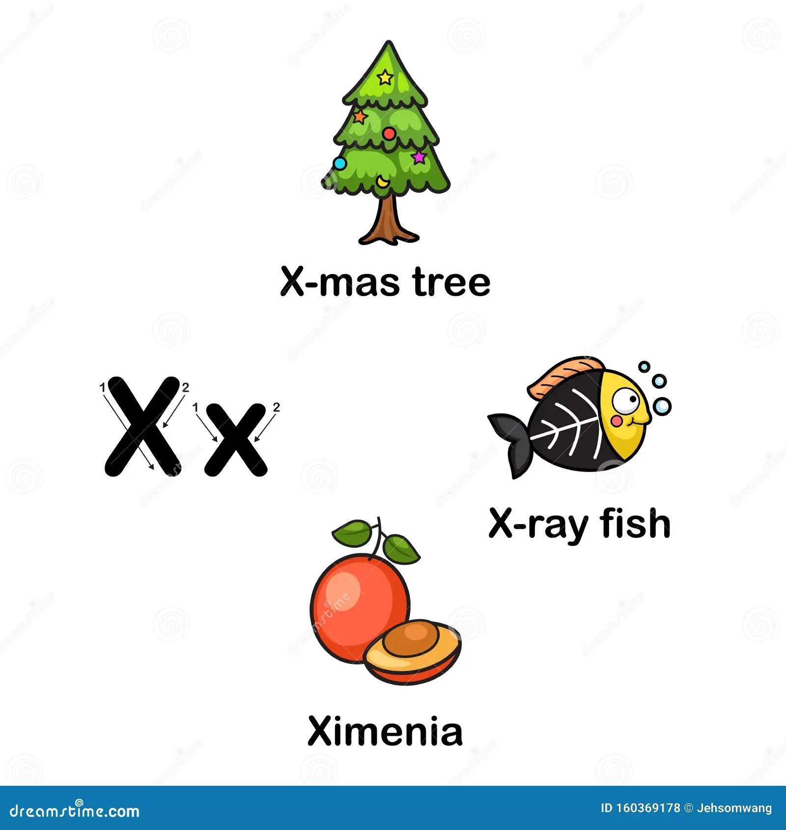 Alphabet Letter X X Mas Tree Ximenia X Ray Fish Stock