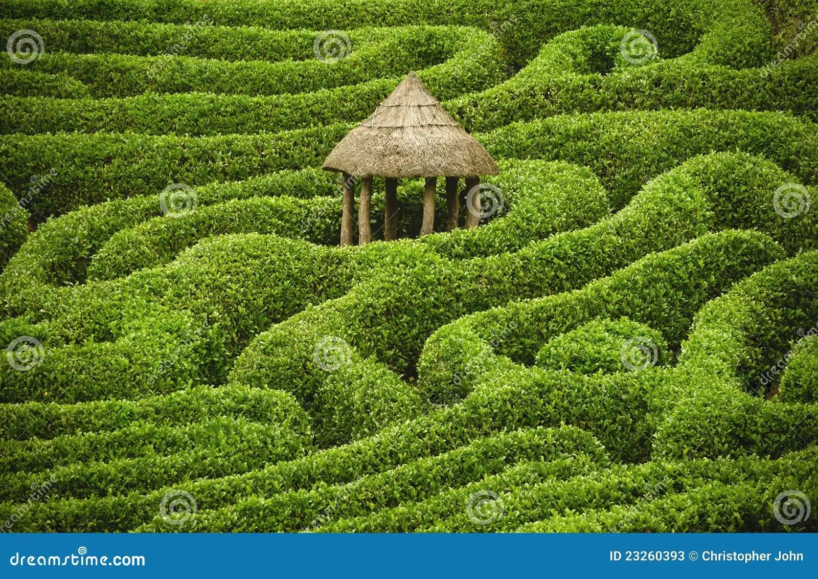Amazing Maze Stock Image Image Of Puzzle Path Bush