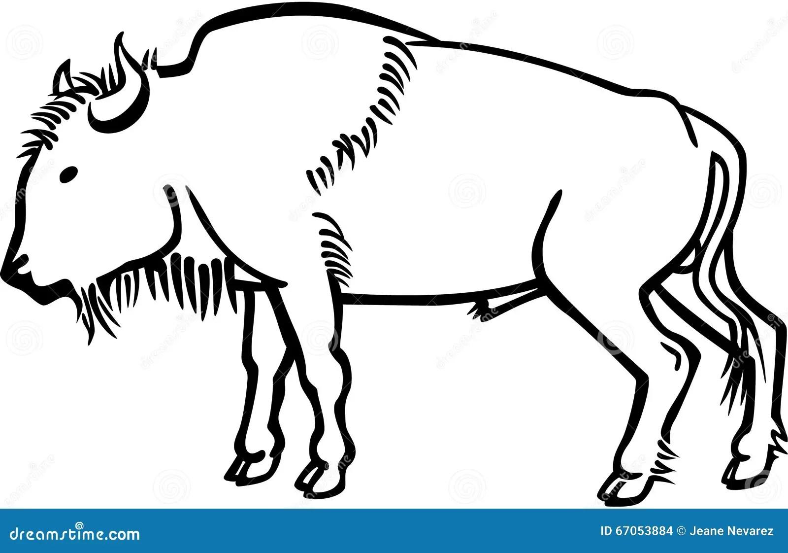 American Bison Stock Vector Image Of Standing Black