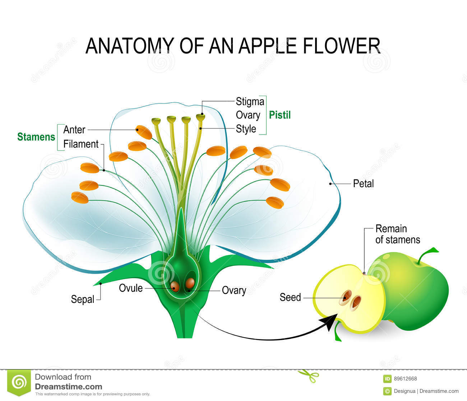 Worksheet Seed Parts Of Fruit