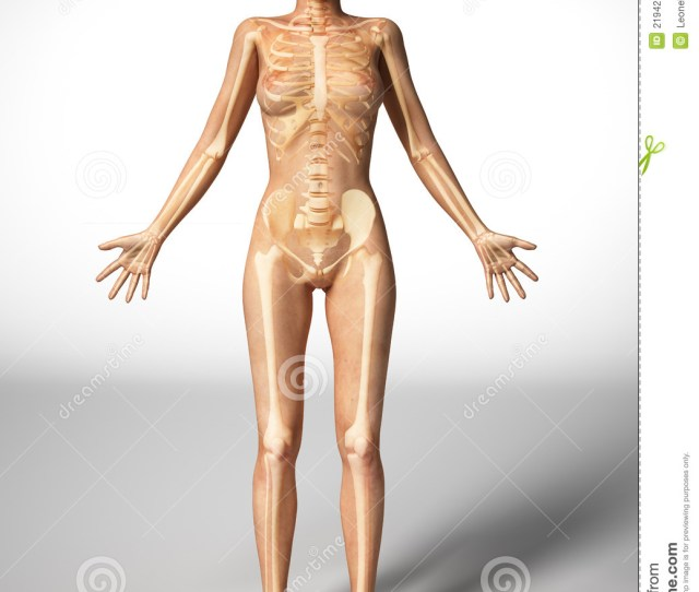 Anatomy Naked Woman Body With Bone Skeleton