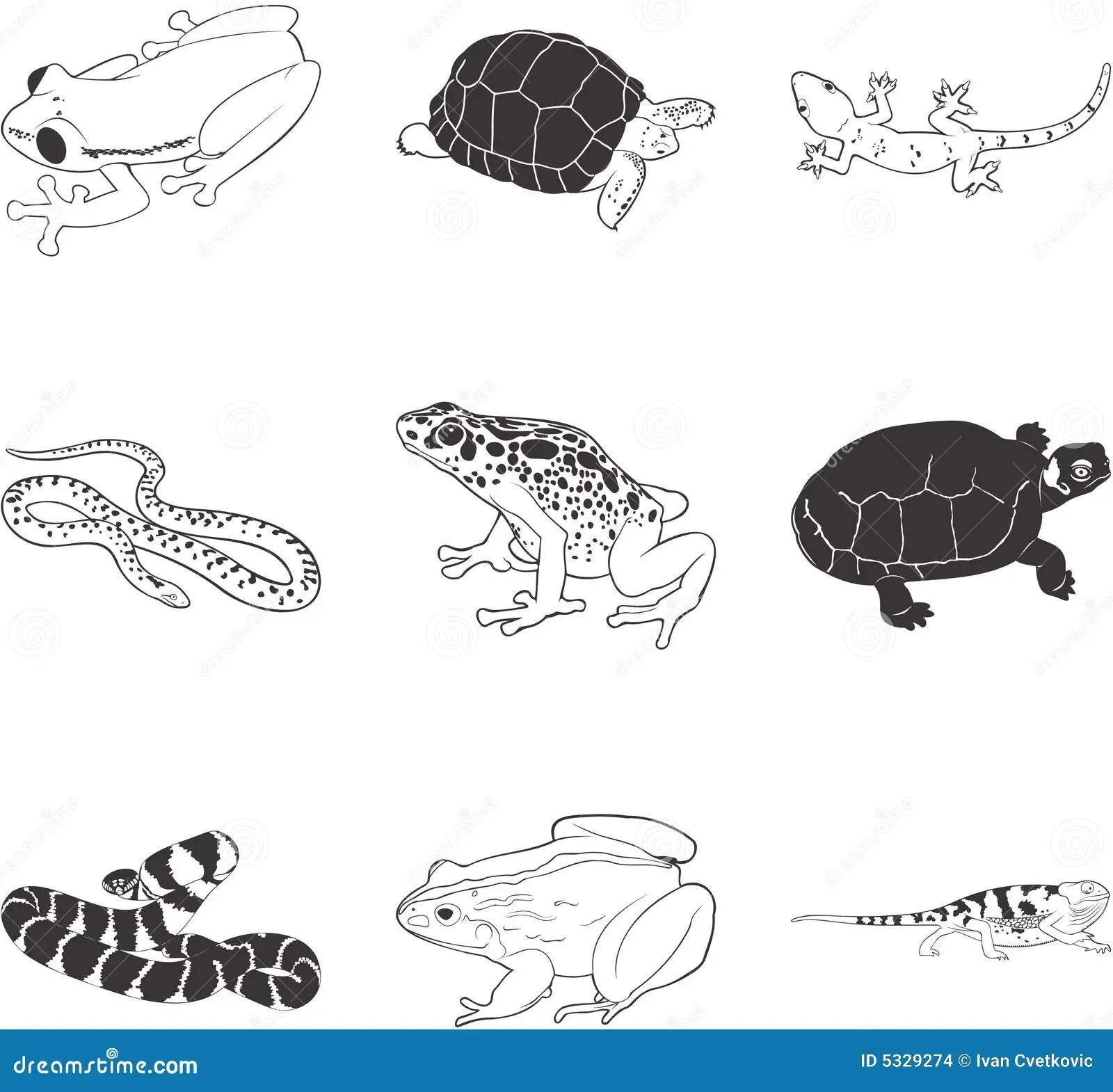 Anfibios Y Reptiles Ilustracion Del Vector Ilustracion De